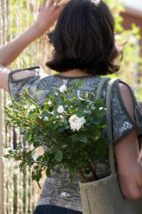 Im Frühjahr Rosen pflanzen bedeutet im Sommer ihre Blüte genießen