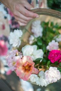 Endloser Genuss dank der langen Blütezeit von Rosen