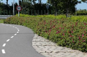 Rosen in öffentlichen Grünanlagen