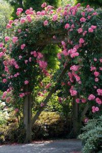 Ein Rosenbogen für Romantik im Garten
